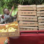 모잠빅, 병아리 사업